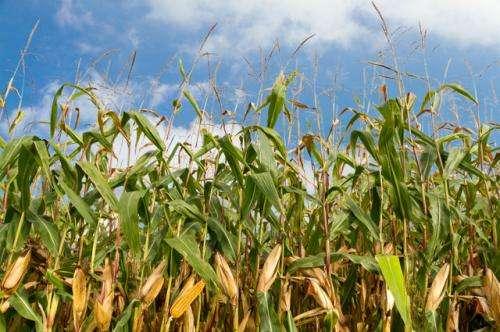 Questioning GMOs
