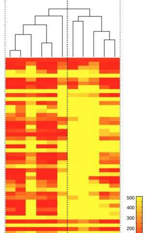 'Barcode' profiling enables analysis of hundreds of tumor marker proteins at once