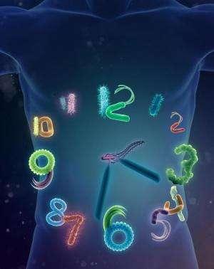 Reading a biological clock in the dark