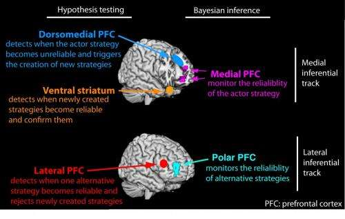 Reasoning processes in the prefrontal cortex