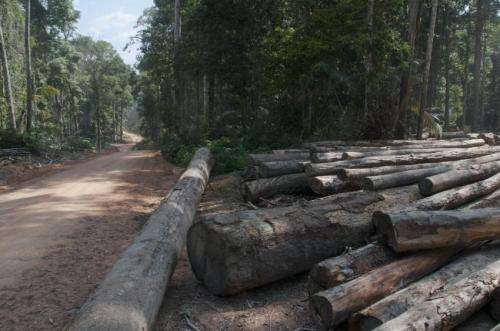 Reduced-impact logging supports diversity of forests almost as well as leaving them alone
