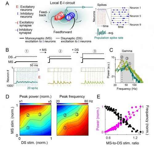 Relative strength of MS and DS stimulation to inhibitory neurons determines spiking activity oscillations power and frequency