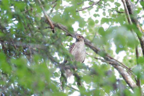 Retaining forests where raptors nest can help to protect biodiversity