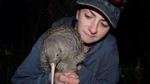 Rising kiwi numbers may mask inbreeding depression