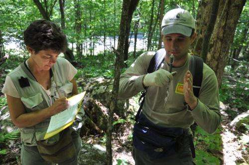 Salamanders shrinking as their mountain havens heat up
