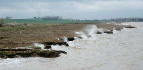 Salt marsh plants key to reducing coastal erosion and flooding