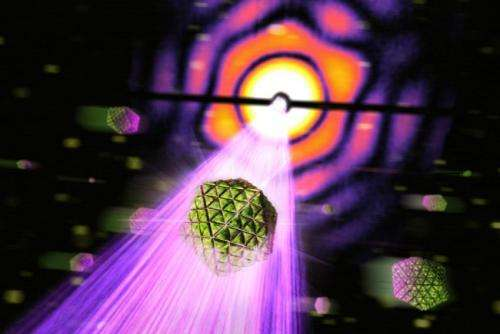 Scientists X-ray tiny cell organelles responsible for carbon fixation