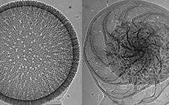 Seashells provide million-year-old weather report