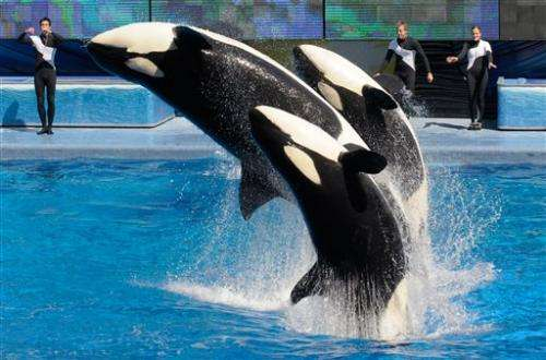 SeaWorld plans bigger killer whale environments