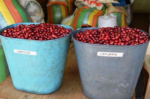 'Sensory trial' will provide vital info for entire coffee supply chain