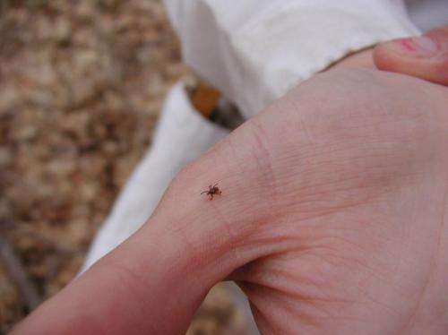 Single tick bite can pack double pathogen punch