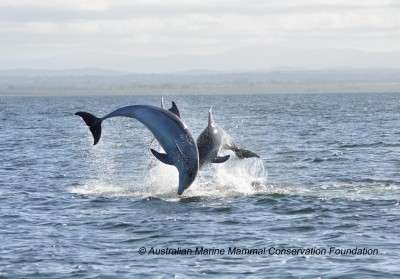 Small isolated populations pose a threat to new dolphin species