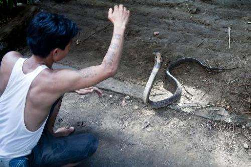 """Snake charmer Sein Tin feels protected by his """"magical"""" tattoos, he is shown here with a cobra at Yangon Zoo on Octobe"""