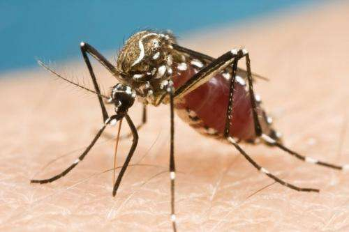 Sniffing out new repellents: why mozzies can't stand the DEET