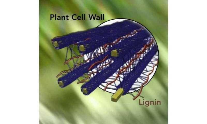 Soil Bacterium Causes Biofuel Breakdown