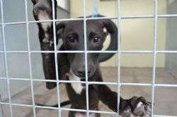 Some dogs find kennels exciting, not stressful