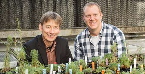 Some plants regenerate by duplicating their DNA