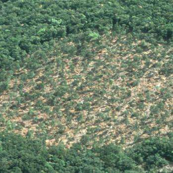Spanish forest ecosystems' carbon emission will be higher than sequestration