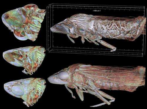 Spanish scientist obtains international award for 3-D video of a journey to the interior of a cicada