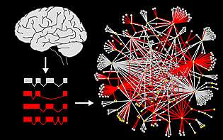Splice variants reveal connections among autism genes
