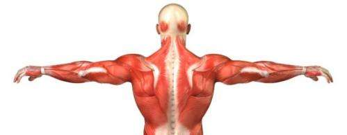 Sports scientists piecing together jigsaw puzzle of muscle growth