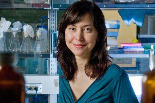 Stanford bioengineers develop a toolkit for designing more successful synthetic molecules