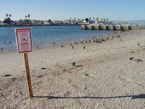 Stanford study shows ways to improve public health at beaches