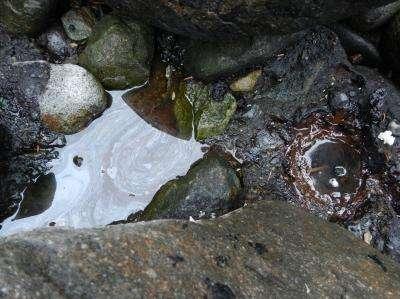 Still-fresh remnants of Exxon Valdez oil protected by boulders