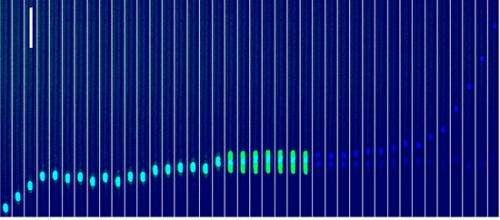Stochastic variations of migration speed between cells in clonal populations