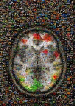 Study cracks how the brain processes emotions