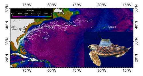 Study provides new information about the sea turtle 'lost years'