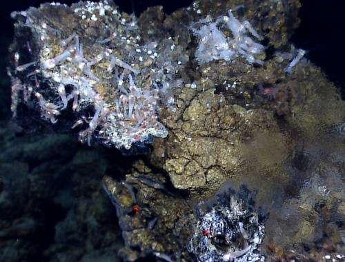 Study tests theory that life originated at deep sea vents