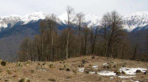 Stumps of the trees that were cut down in the Sochi National Park to make way for the Rosa Khutor Alpine Centre, one of the Soch