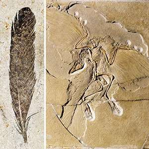 Taking a deeper look at 'ancient wing'