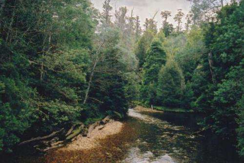 Tasmania scraps 'peace deal' that protects nativeforests