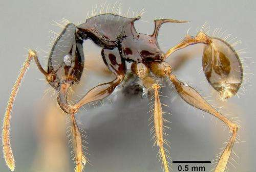 The ants that conquered the world