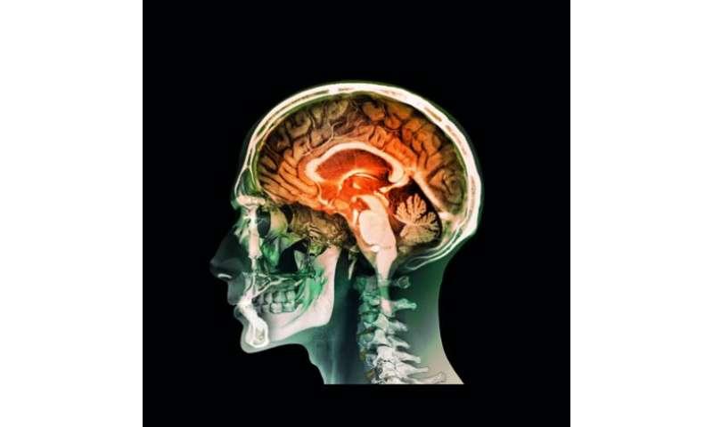 The brain`s forgotten glial cells