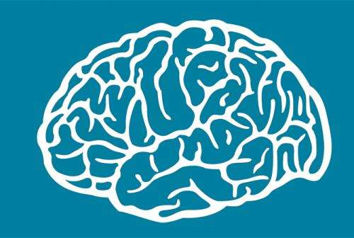 """The brain's RAM: Rats, like humans, have a """"working memory"""""""