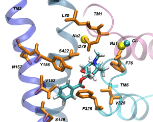 The dopamine transporter