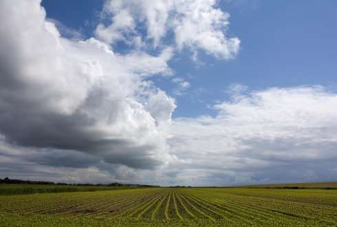 The interaction between vegetation and clouds