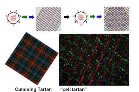 The sonic screwdriver than can turn cells tartan