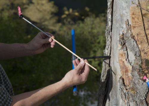 Tree rings reveal nightmare droughts in the West