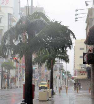 Trees sway in strong wind caused by Typhoon Vongfong in Naha, Japan's Okinawa island on October 11, 2014