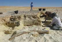 Tusk suggests greener, wetter Arabian Desert in the past