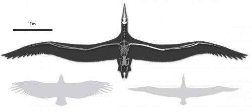 Bruce Museum scientist identifies world's largest-ever flying bird