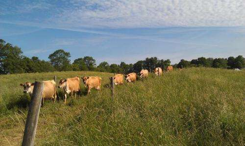 UNH survey: Milk prices top concern of Northeastern organic dairy farmers