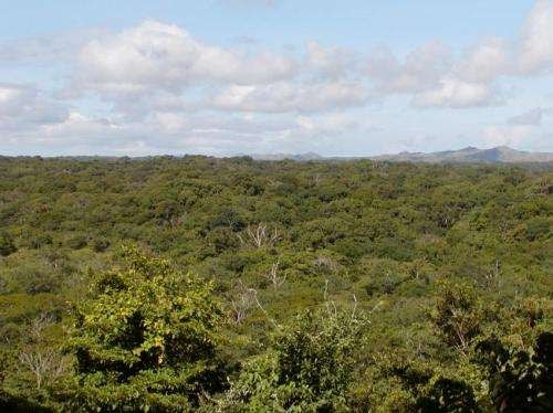 Variation in antibiotic bacteria in tropical forest soils may play a role in diversity