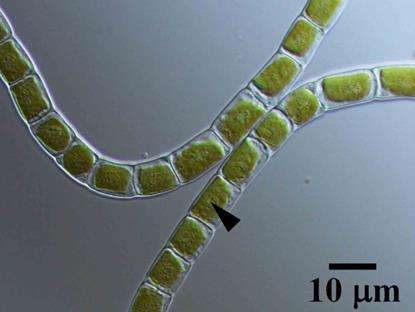 Genome analysis reveals how algae evolved into land plants
