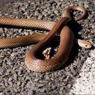 Vet's warning over waking snakes