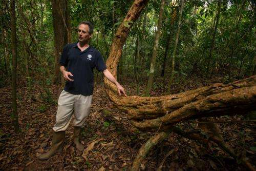 Vines choke a forest's ability to capture carbon, Smithsonian scientists report